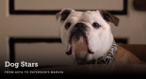 dogs star.jpg