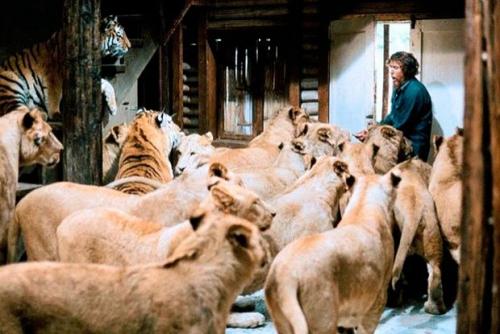 foule lions.jpg