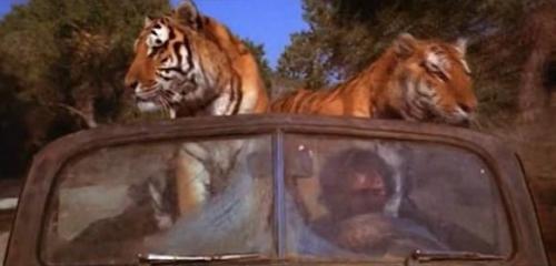 tigres_car.jpg